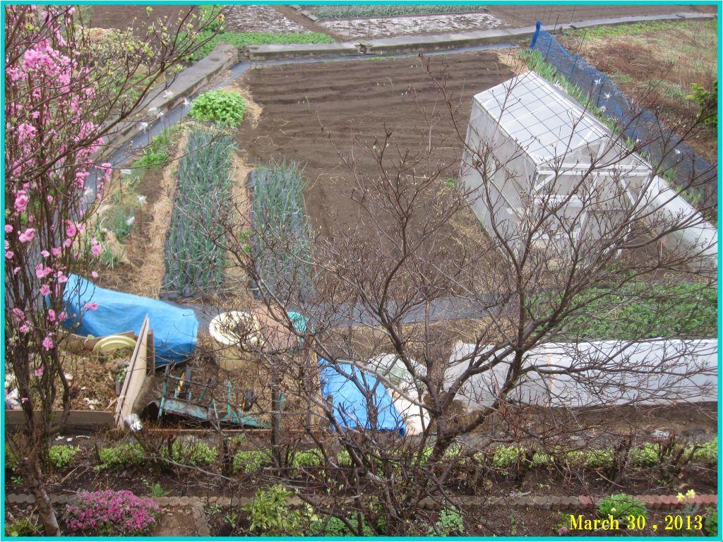 画像1(畑の全景)