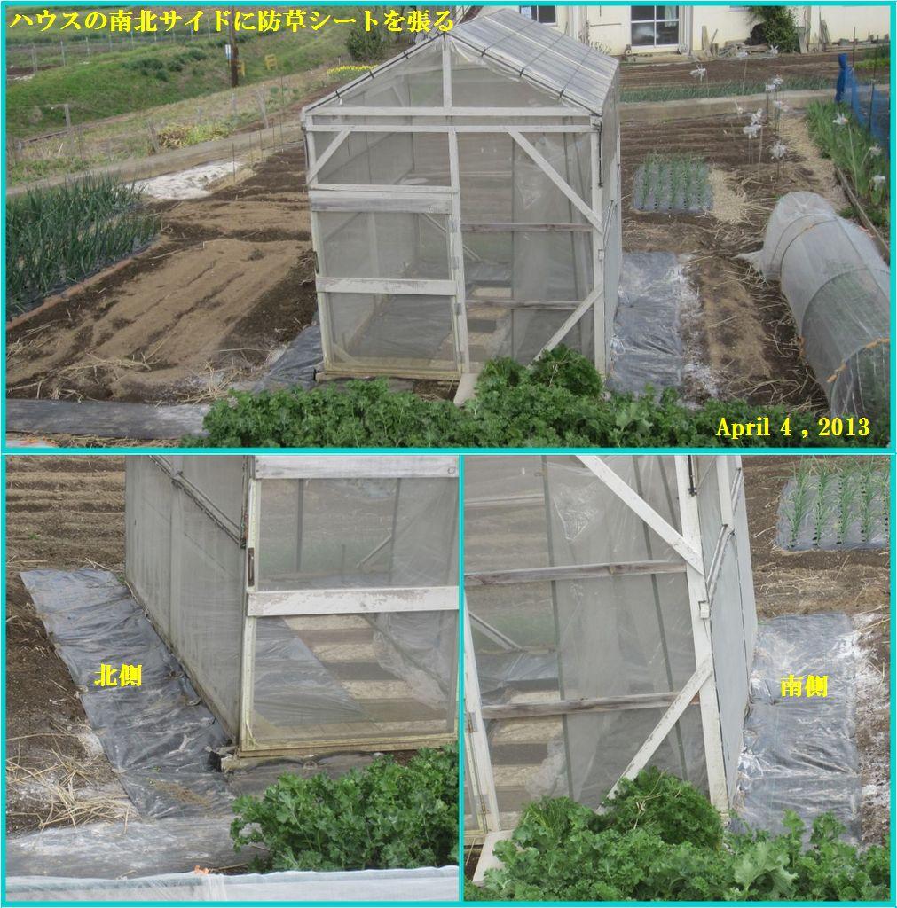 画像3(ハウス周囲の防草シート張り)