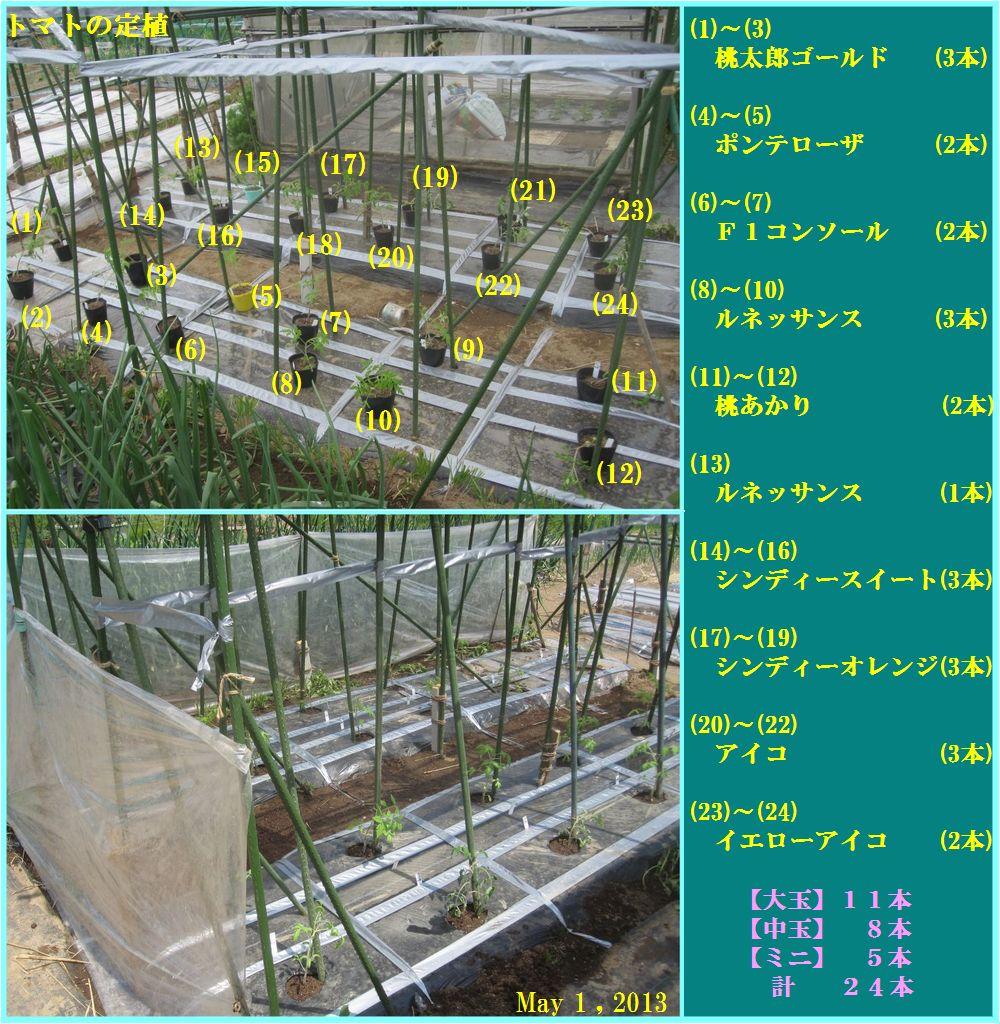 画像3(トマトの定植)