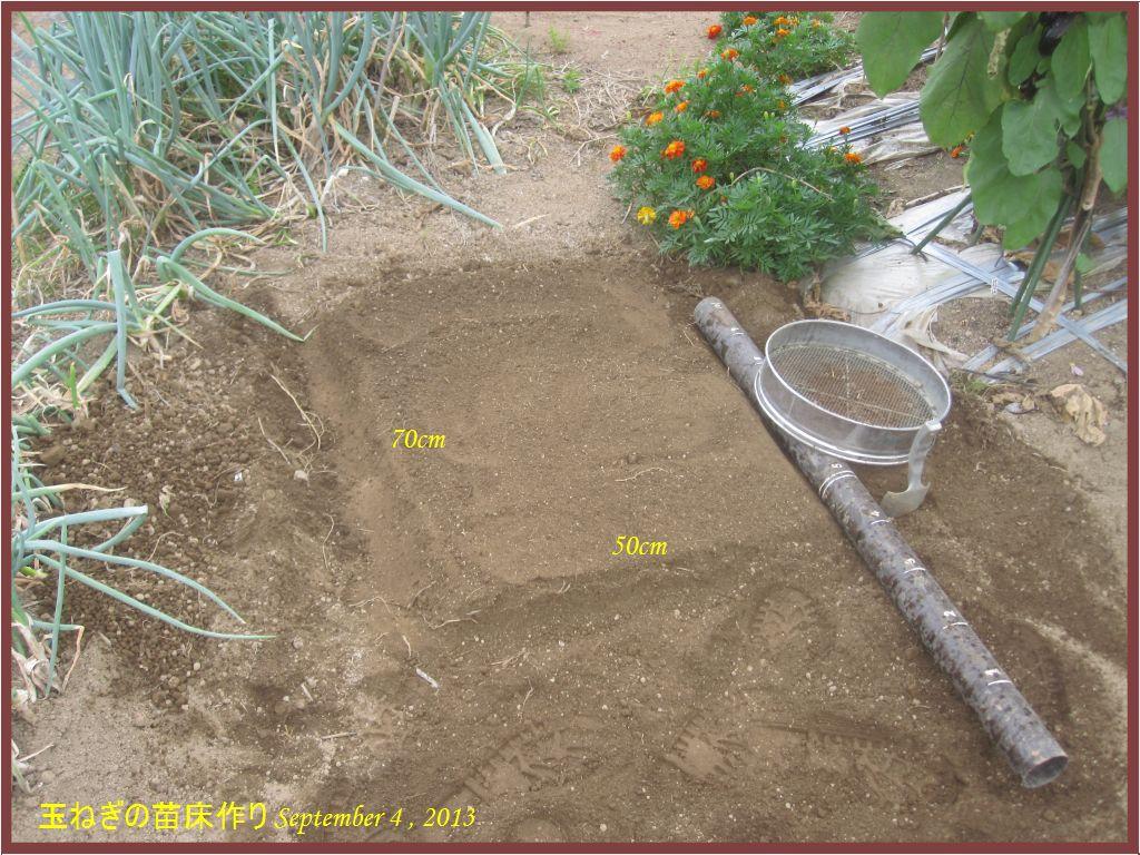 画像2(玉ねぎの苗床作り)