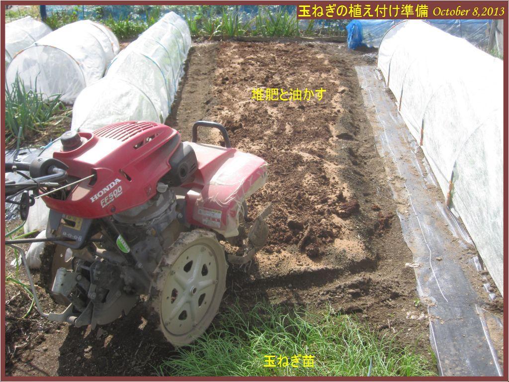 画像3(玉ねぎの植え付け準備(堆肥投入と耕耘)