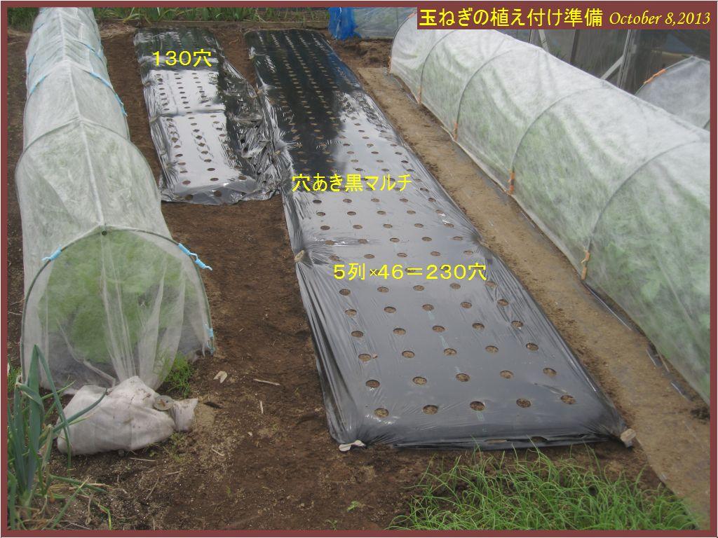 画像5(玉ねぎの植え付け準備 黒マルチ)