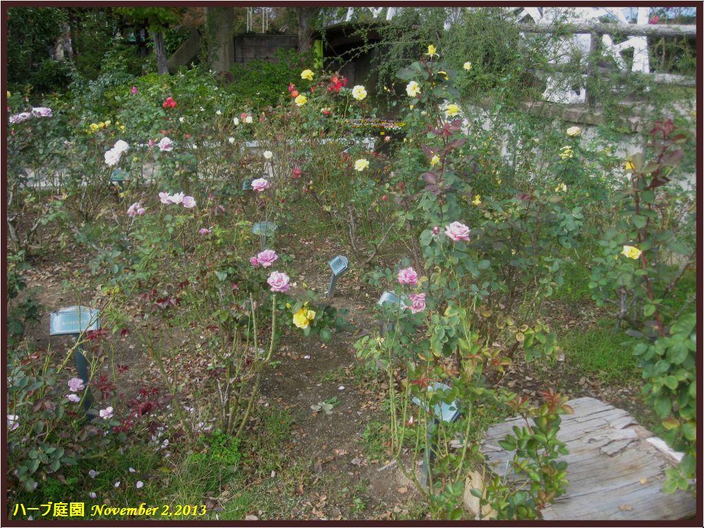 画像5(ハーブ庭園「バラの庭園」)