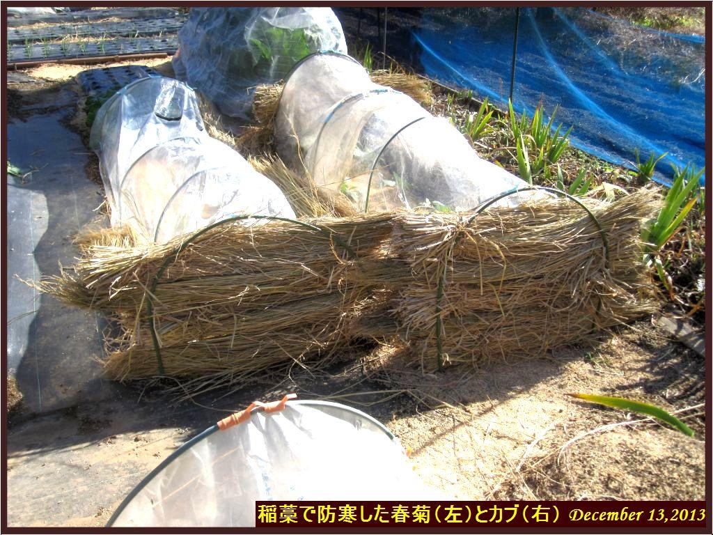 画像1(稲藁の防寒)