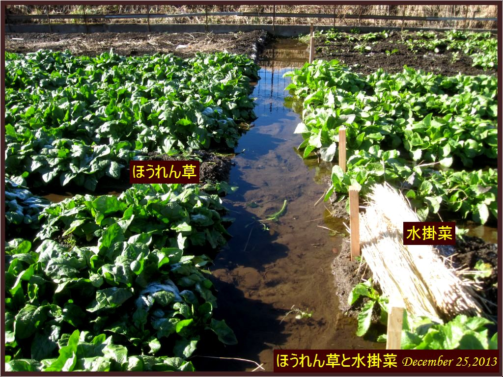 画像5(ほうれん草)