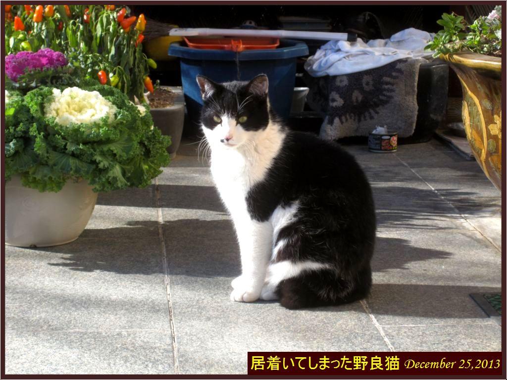 画像7(居着いてしまった野良猫)