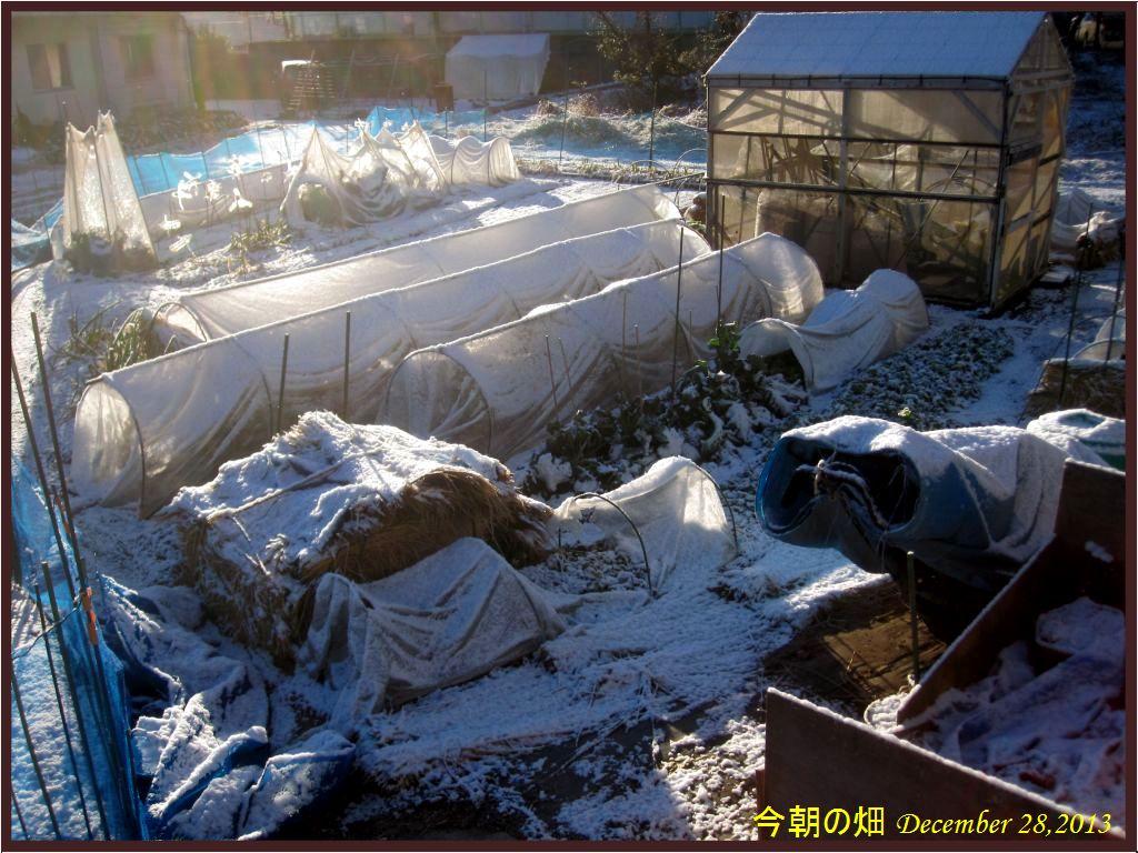 画像8(今朝の畑)