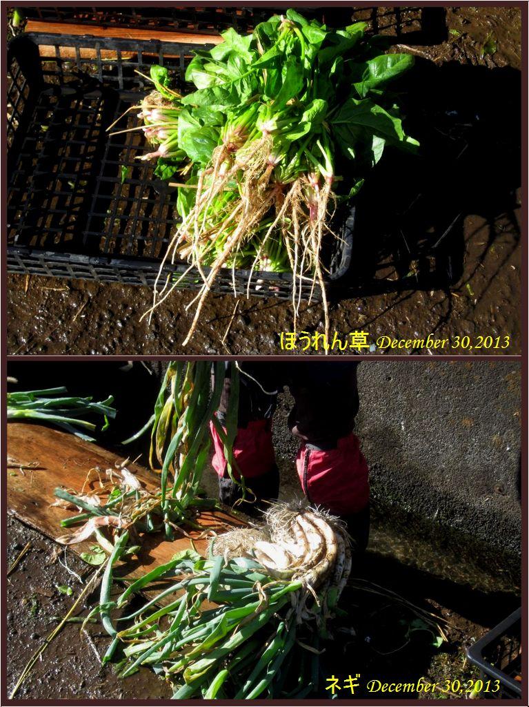 画像2(ほうれん草とネギ)