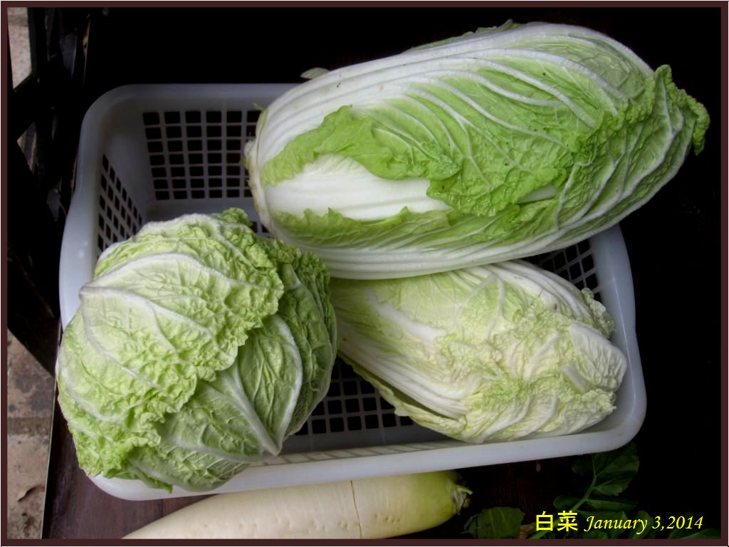 画像6(白菜)