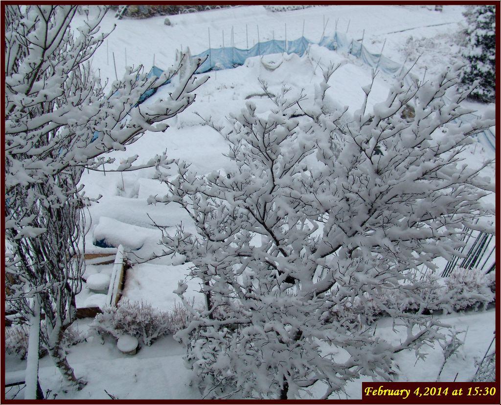 画像3(午後4時の畑の雪)