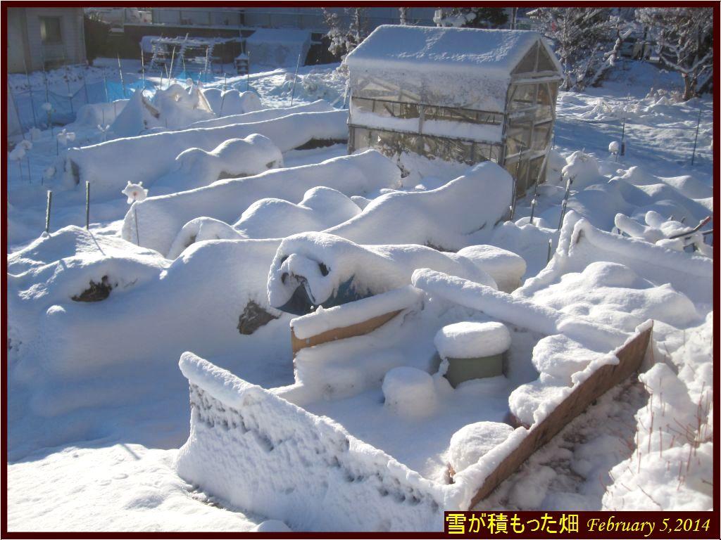 画像2(雪が積もった畑)