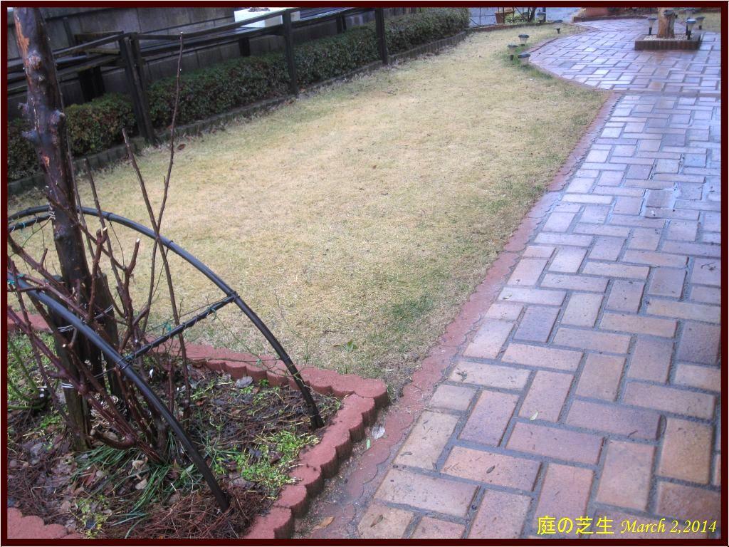 画像1(庭の芝生)