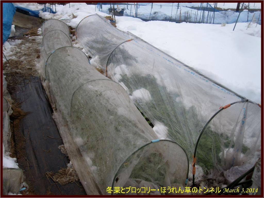 画像6(冬菜とブロッコリー・ほうれん草)
