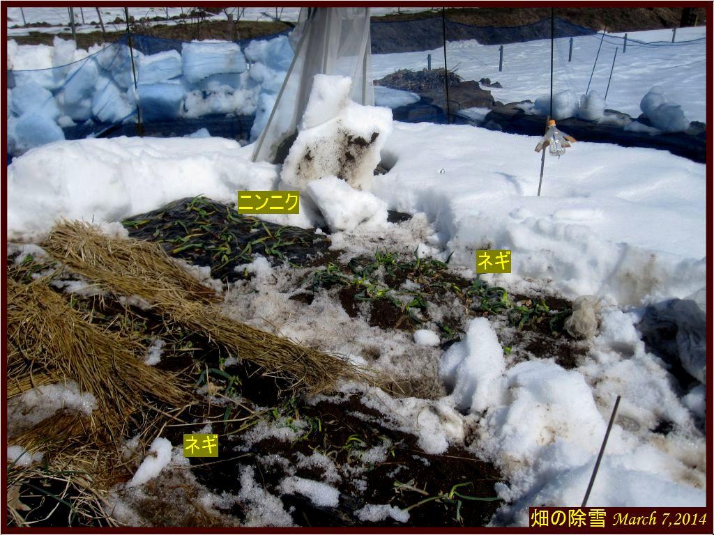 画像1(畑の除雪)