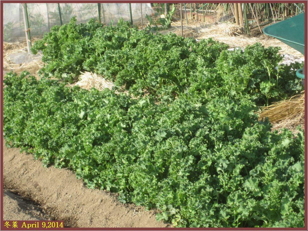 画像2(冬菜)