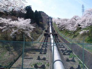 画像1(鹿留発電所の桜)