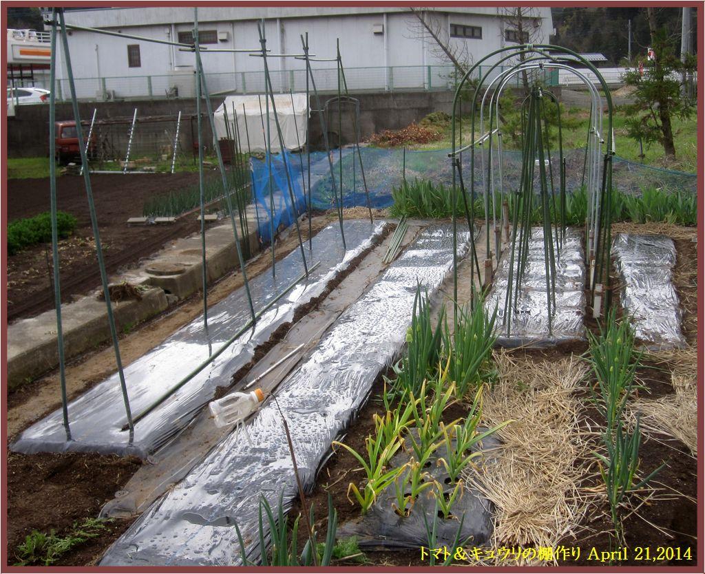 画像1(トマトとキュウリの棚作り)