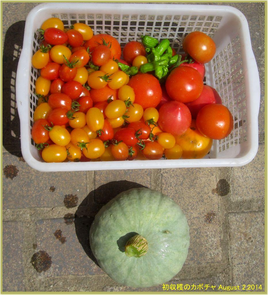 画像1(初収穫のカボチャ)