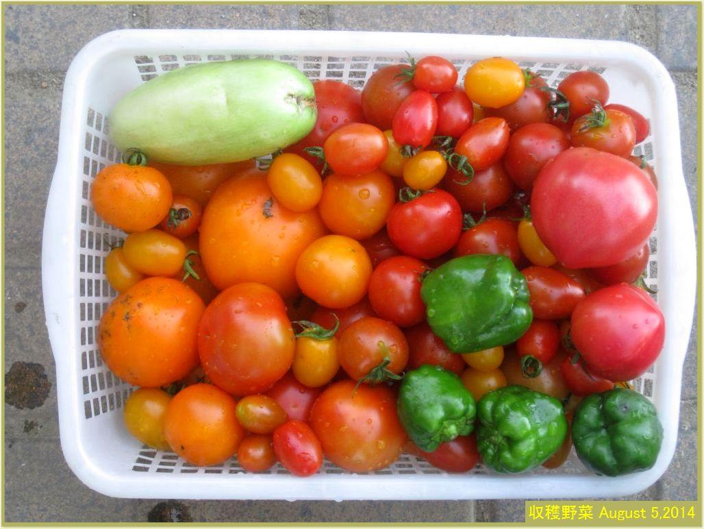 画像2(収穫野菜)