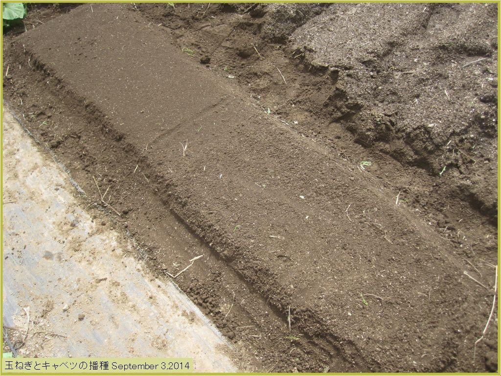 画像3(玉ねぎとキャベツの種蒔き)