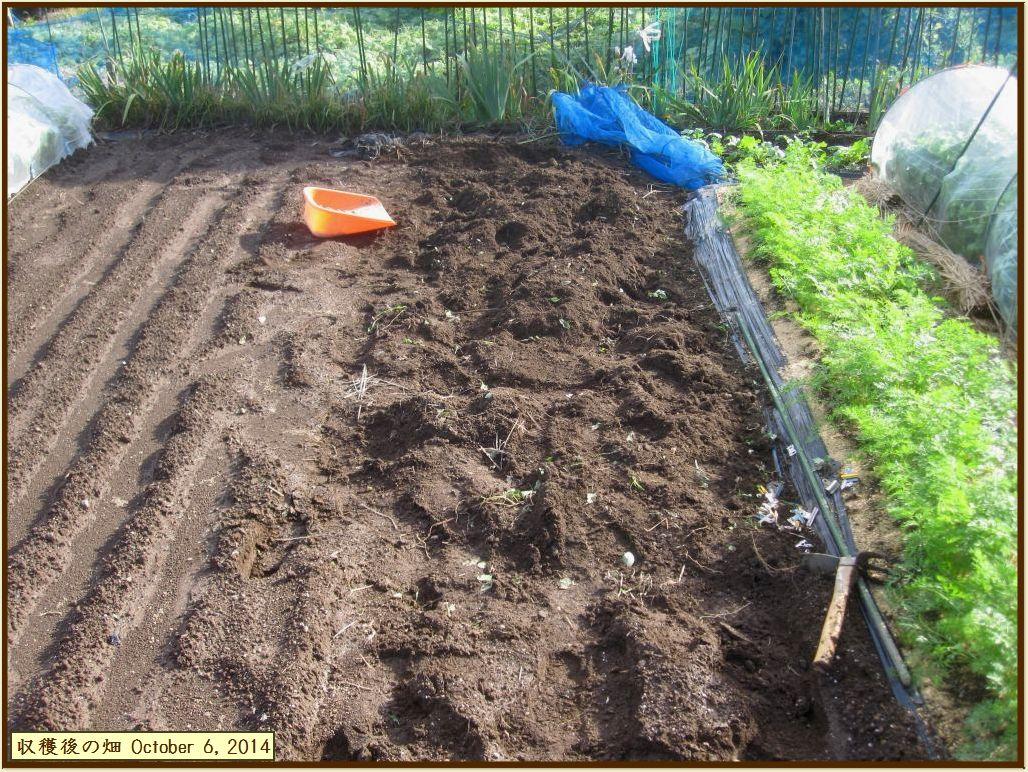 画像8(落花生収穫後の畑)