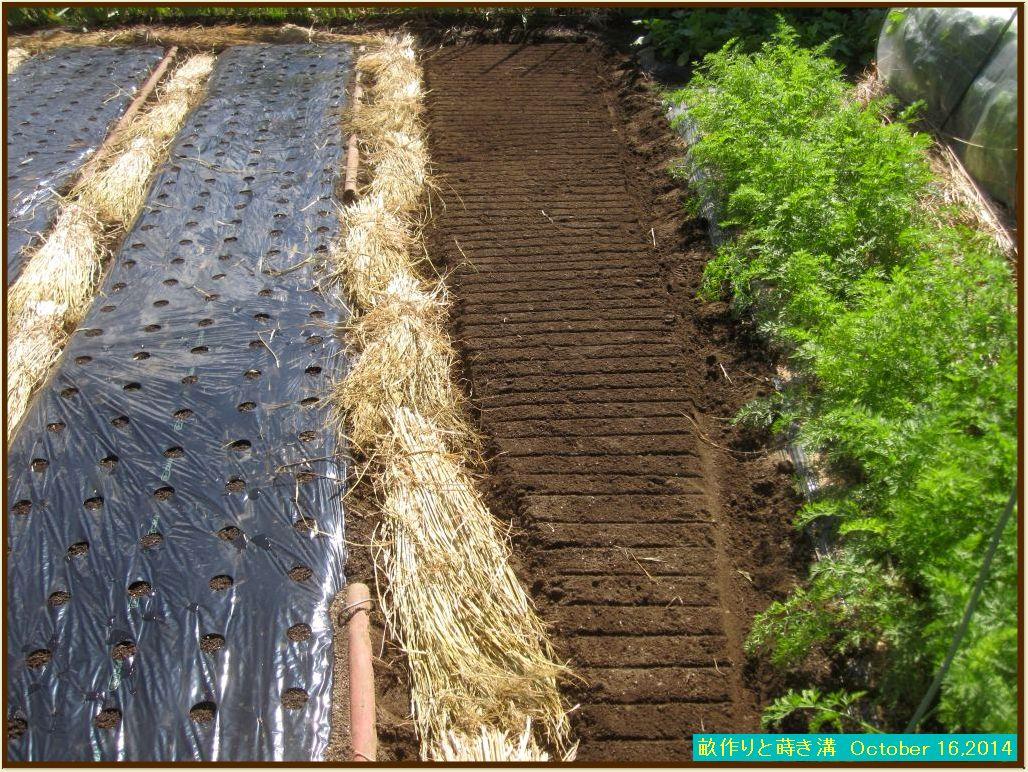 画像5(畝作りと蒔き溝)