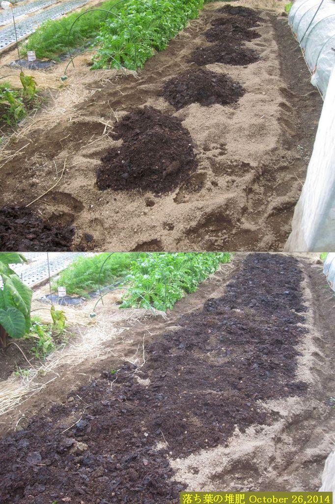 画像7(落ち葉の堆肥)