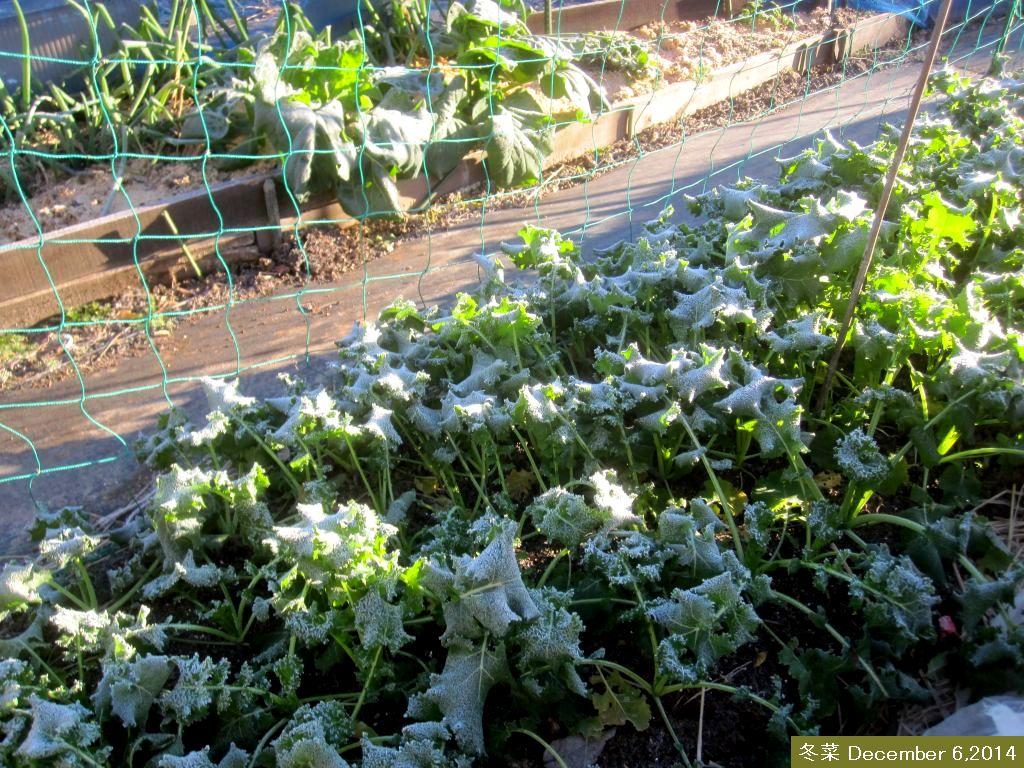 画像3(冬菜)