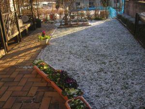 画像4(庭の雪)