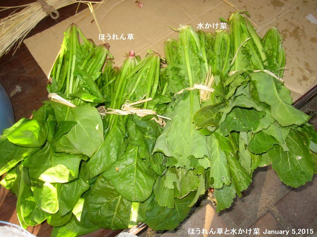 画像5(ほうれん草と水かけ菜)