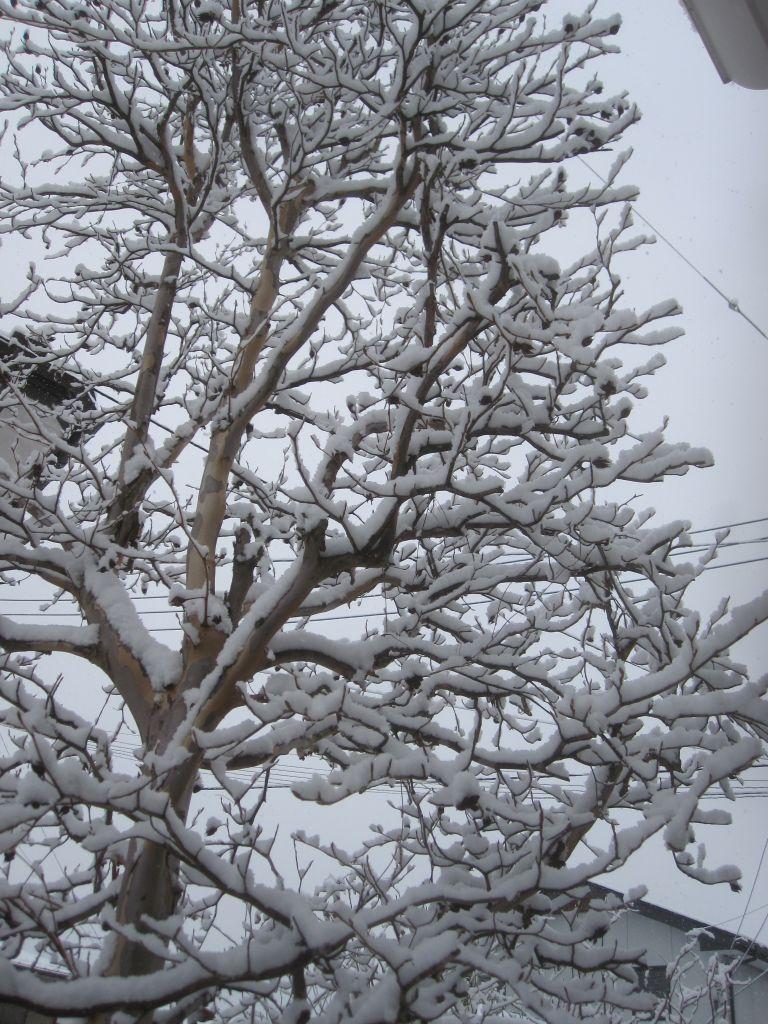 画像3(雪)