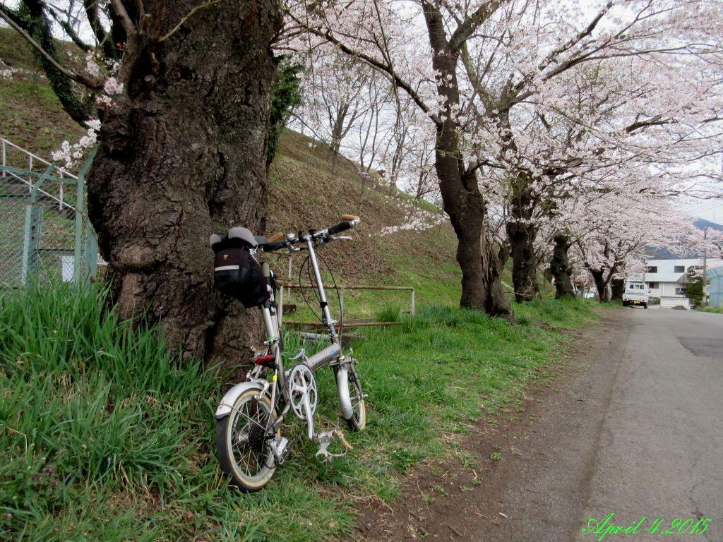 画像5(鹿留発電所の桜)