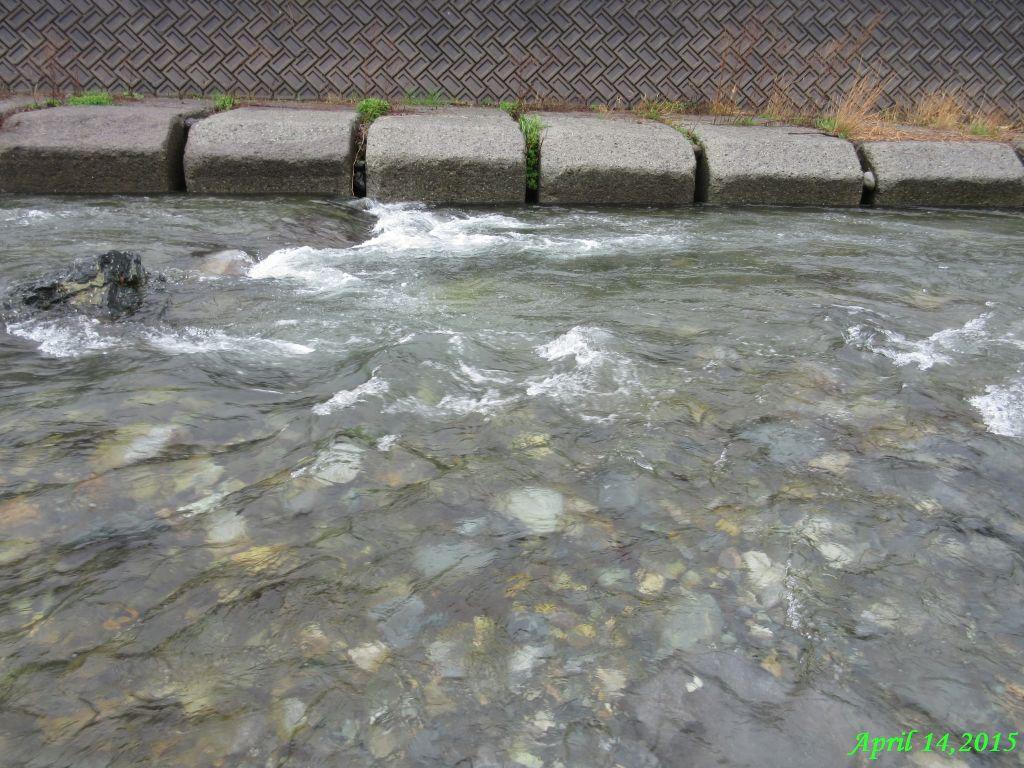 画像4(鹿留川)