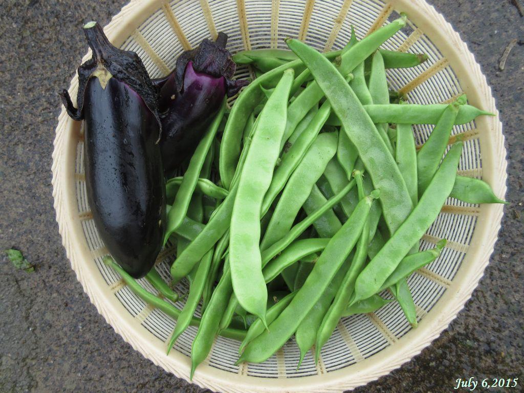 画像5(収穫したインゲンと茄子)
