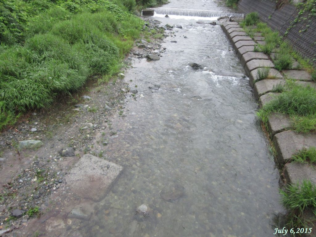 画像6(鹿留川)