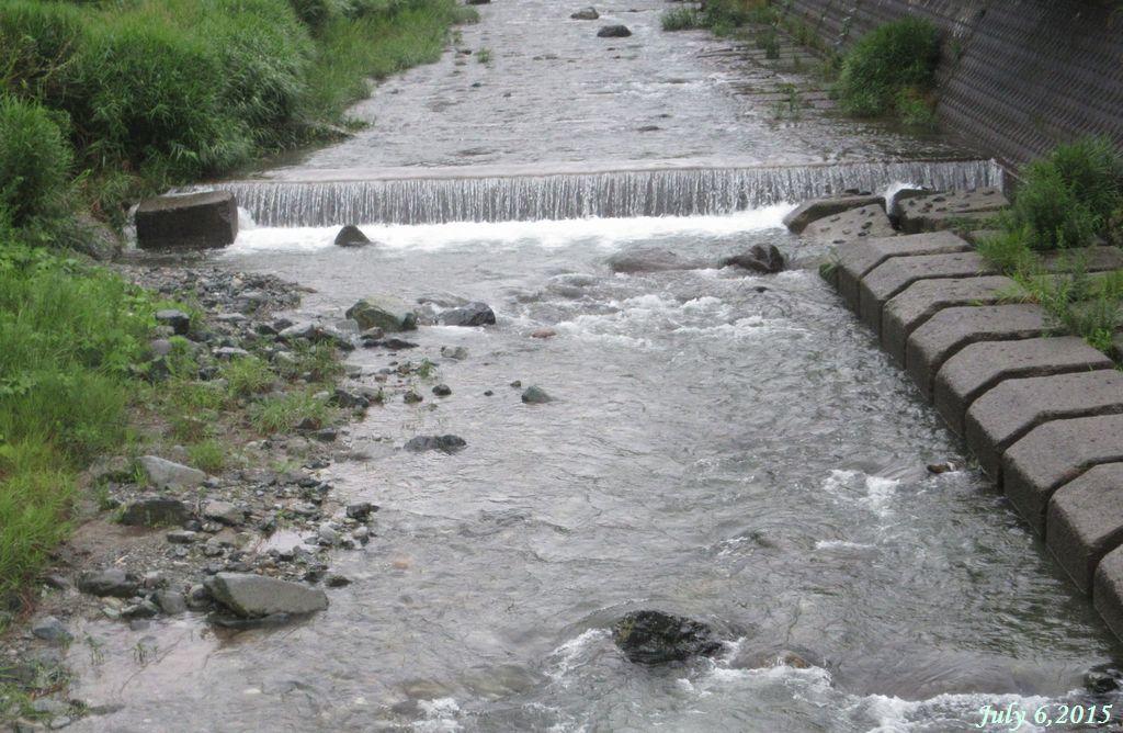 画像7(鹿留川)