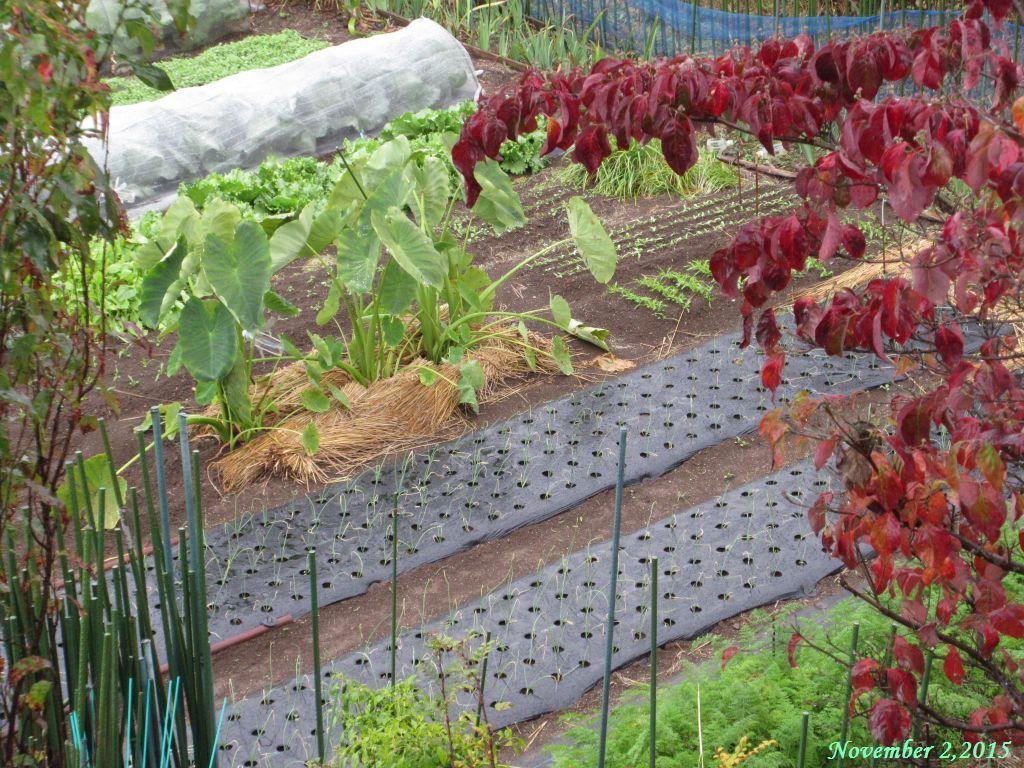 画像3(雨の日の畑)