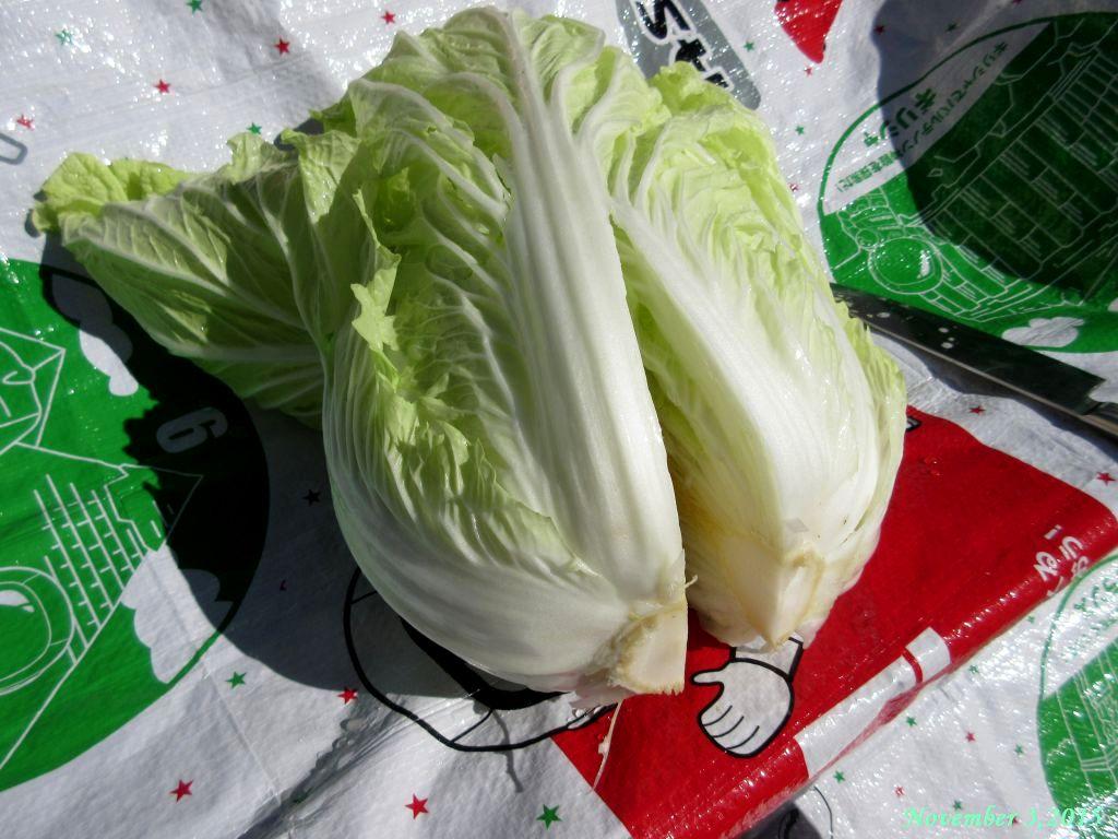 画像4(切れ込みを入れた白菜)
