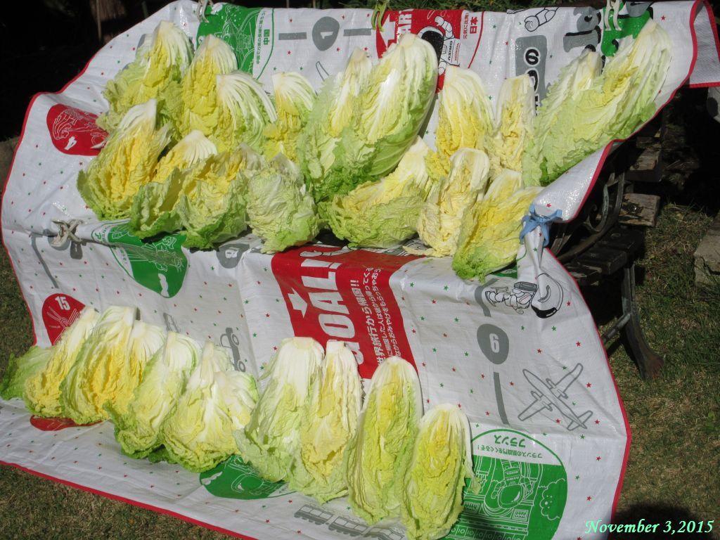 画像5(白菜の天日干し)