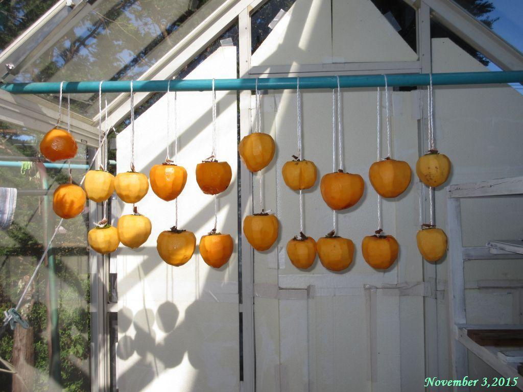 画像9(干し柿作り)