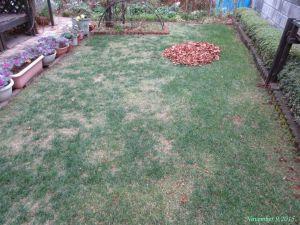 画像10(芝生の落ち葉)
