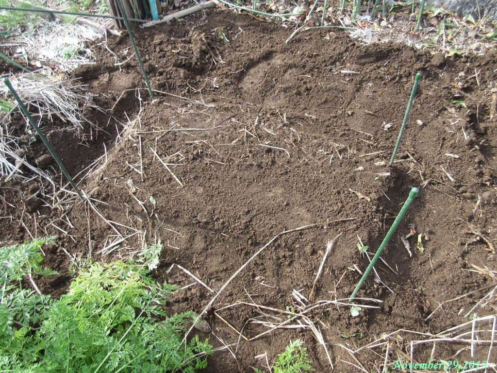 画像9(土をかけて埋める)