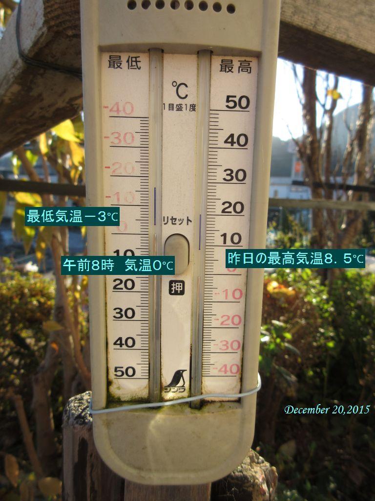 画像1(温度計)
