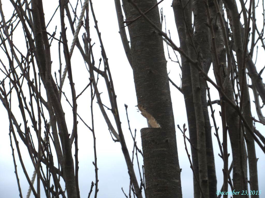 画像3(花桃の木をくさび型にカット)