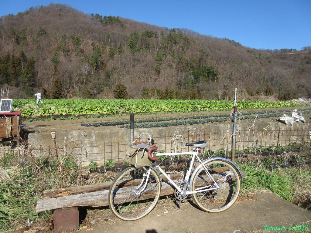 画像14(十日市場・水掛け菜の畑)