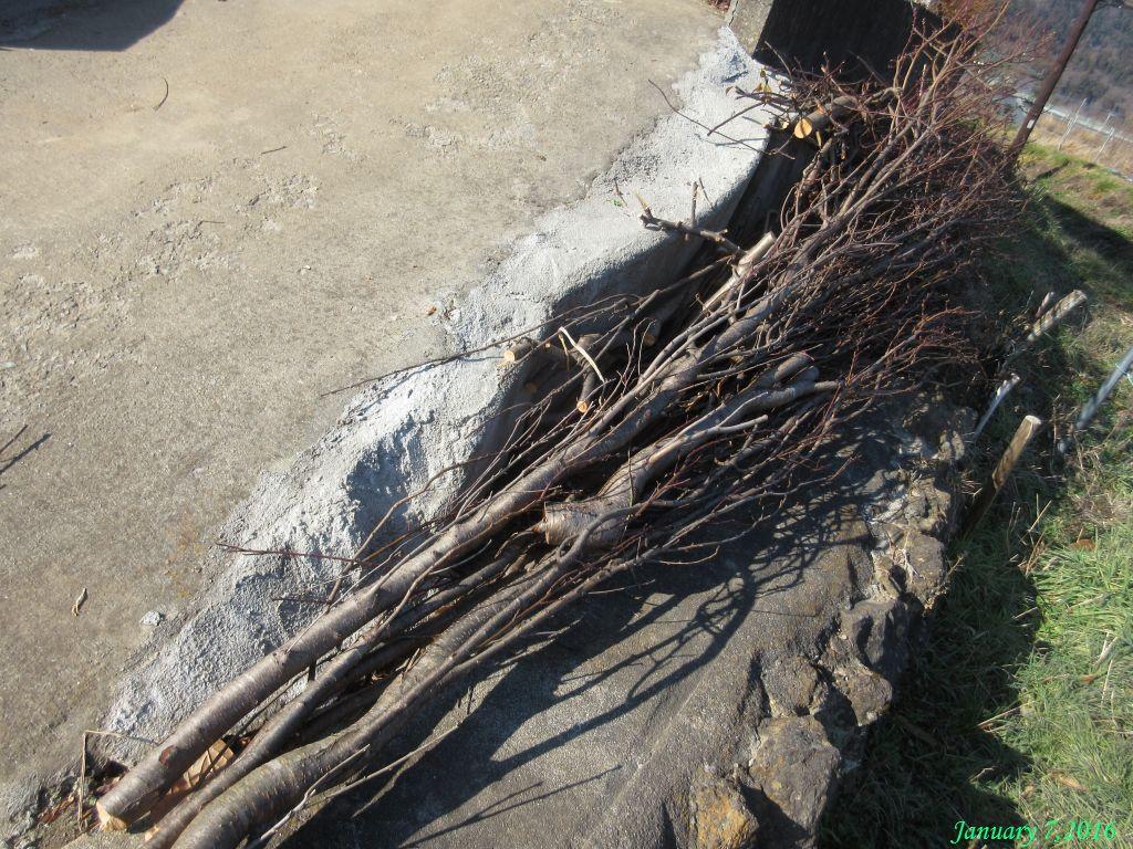 画像5(伐採したハナモモの木)