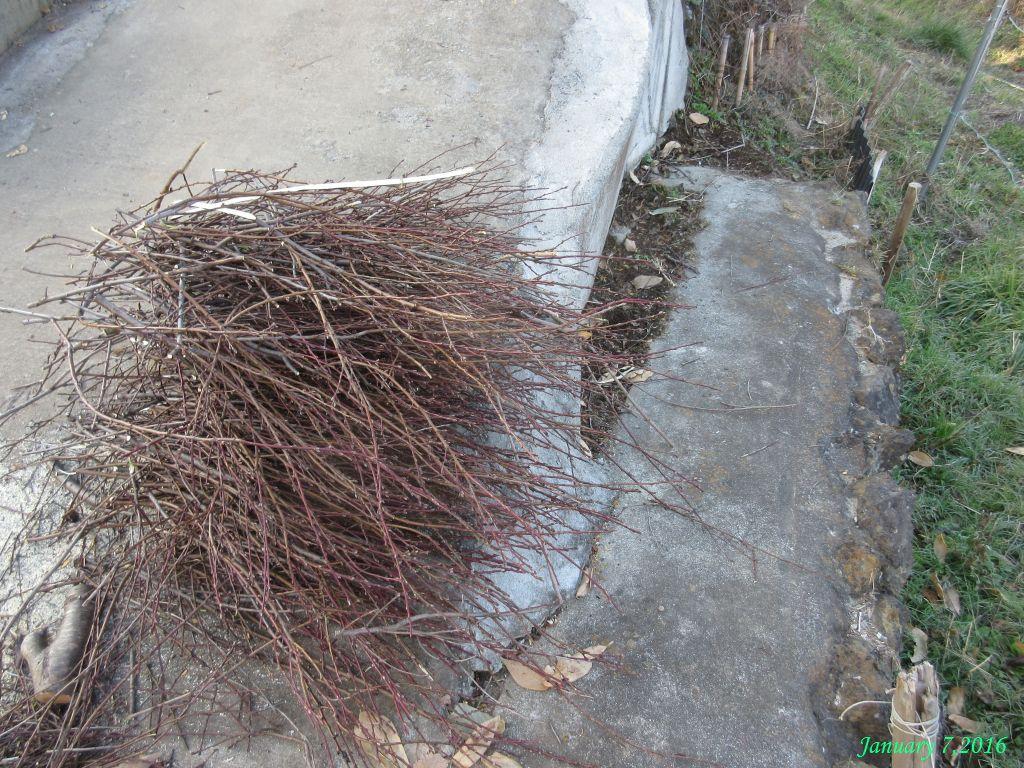 画像7(庭木の片づけ)