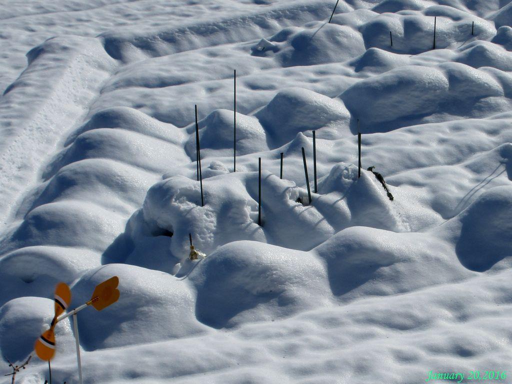 画像5(畑の雪)