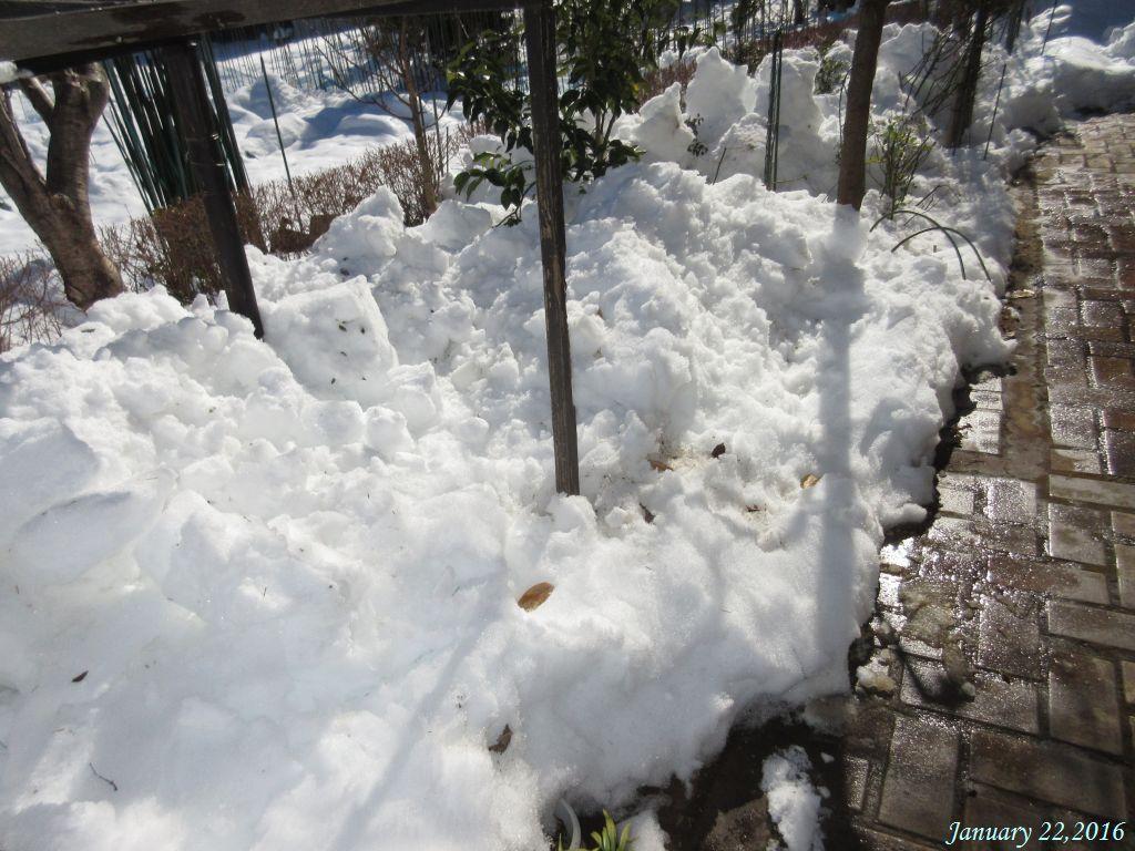 画像1(庭の残雪)
