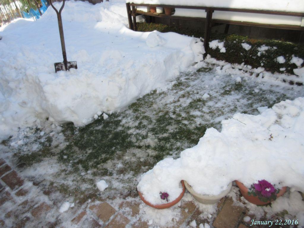 画像2(除雪)